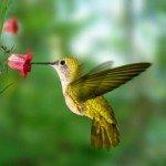 Орігамі пташка Хаммінг (Колібрі)