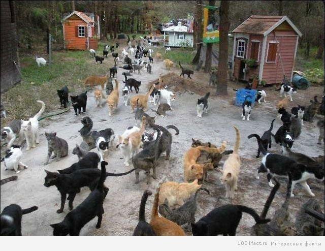 Про Світовому Дні Котів