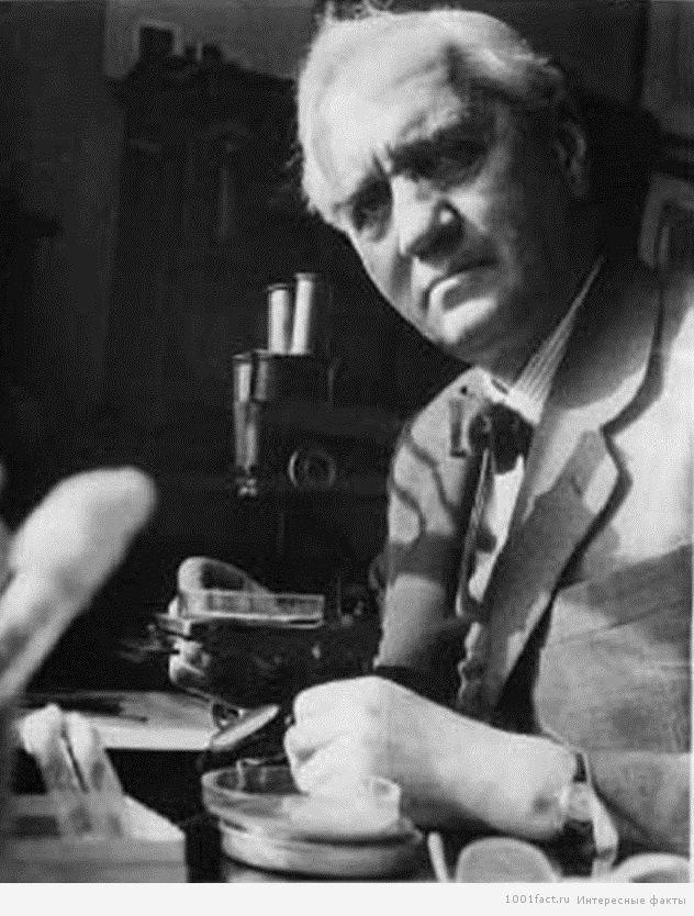 Олександр Флемінг і його відкриття пеніциліну