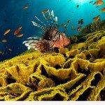 Факти про Червоному морі