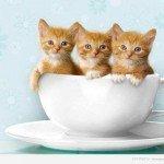 Про кошенятах: деякі цікаві факти