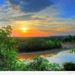 Факти про тропічних лісах Амазонки