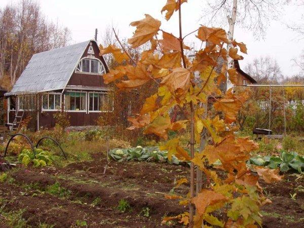 5 основних садових робіт на дачній ділянці перед настанням холодів