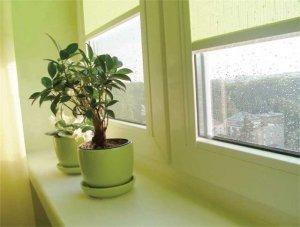 Кімнатні рослини, як головна прикраса нашого будинку