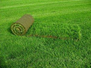 Секрети газону в ландшафтному дизайні
