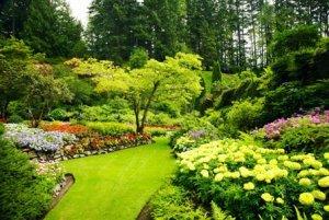 Благоустрій та озеленення ділянки