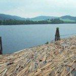 Види лісоматеріалів