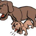 Як відучити собаку гавкати: прості способи виховання