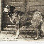 Факти про собак-рятувальників