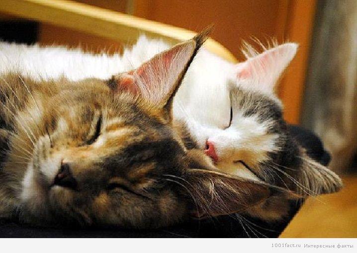 Як сплять кішки: цікаві факти