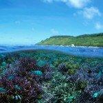 Цікаві факти про коралові рифи