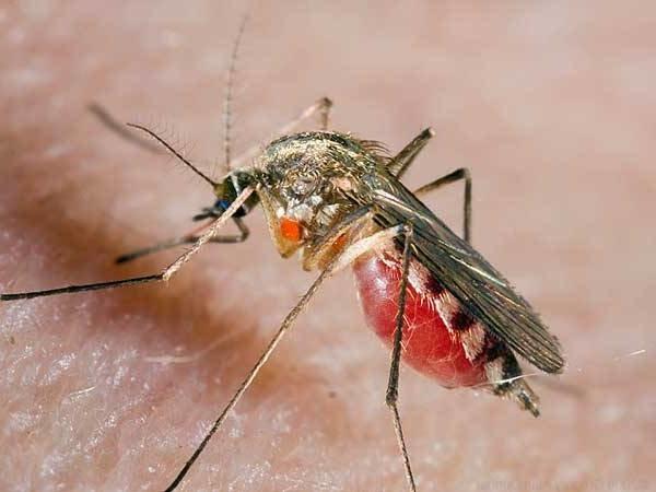Цікаві факти про комарів