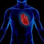 Цікаві факти про серце (частина 2)