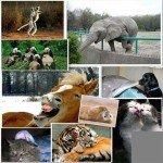 Дещо про тварин